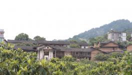 旧村新貌  三棵树助力乡村旅游脱贫